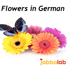 German Vocabulary - Flowers and Garden