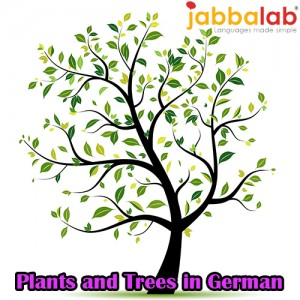 German Vocabulary - Plants and Trees
